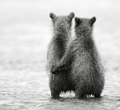 Bear Cub Pals
