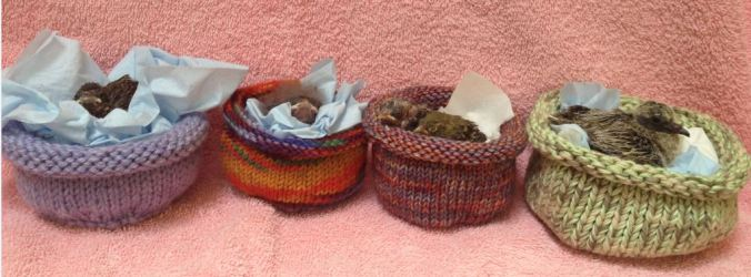 Knitted Nests for Baby Birds, courtesy of Wildcare Wildlife Rescue Center