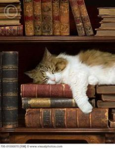 """If only I could read like my human. Osmosis just isn't working for me."""