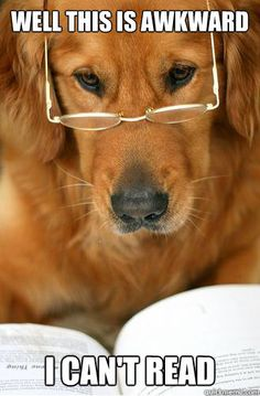 Dog- Reading, Google 11