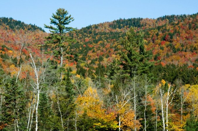 Autumn Hills Foliage, Missouri Ozarks