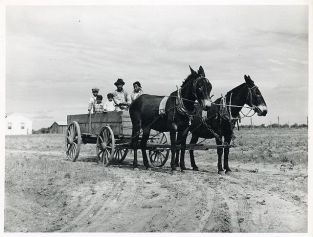 Farm- Wagon- Ben Turner and family in their wagon with mule team. Flint River Farms GA, May 1939