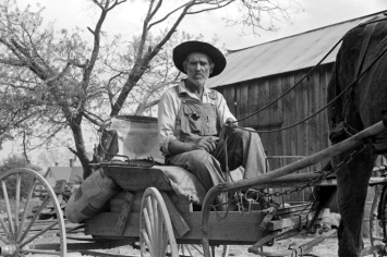 Farm- Wagon- Lee Betties, rural rehabilitation client, with sack of horse and mule feed on rear of his wagon, leaving general store at Woodville, Greene County, Georgia, 1939