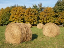 Round Hay Bales in Autumn, October