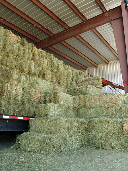 Stacked Hay Bales in the Barn
