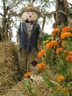 Scarecrow by the Hay Bales and Flowers