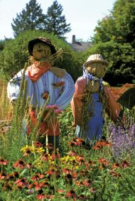 Scarecrows Busy Working in the Field