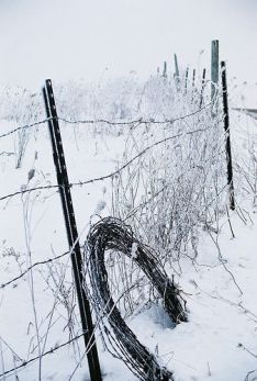 Barbed Wire in Snow- by Truman the llama at the KV Ranch on Flickr