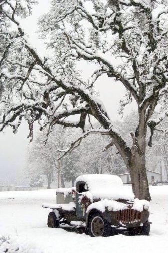 Truck Under the Tree in the Snow
