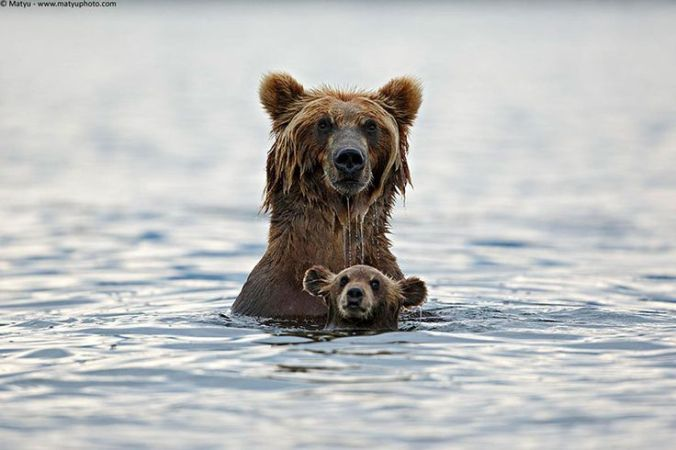 Bear and Cub bath time- Pinterest, uncredited