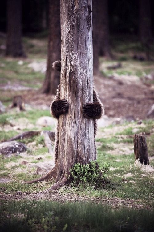 Bear- Peek a Boo- Pinterest