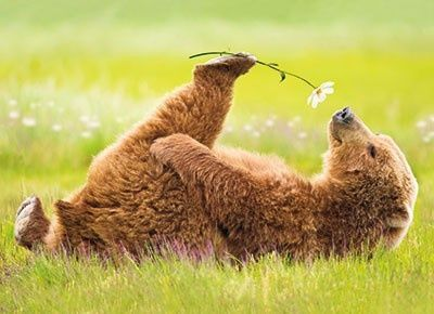 Bear with Flower- Pinterest- Found on coffeelovinmom.tumblr dot com