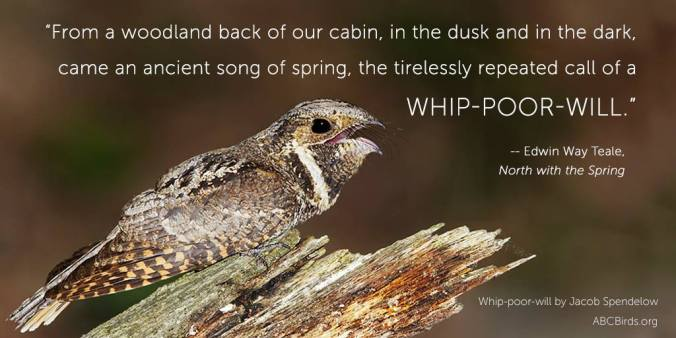 Image via American Bird Conservancy, by Jacob Spendelow