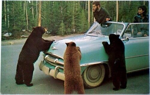 """Hey, y'all.  Do you fellas know where they're showin' the new Little Red Bear video?"""