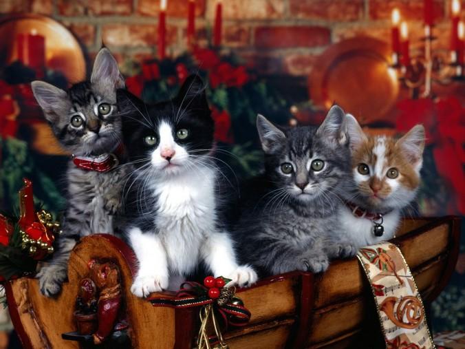 christmas-cats-12-days-of-christmas-artwork-on-seasonchristmas-dot-com
