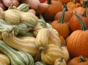 Cushaw Squash and Pumpkins