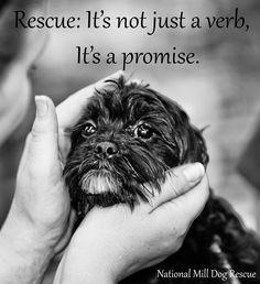 Pet- Adoption 20
