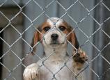 Pet- Adoption 22