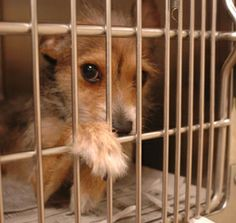 Pet- Adoption 3