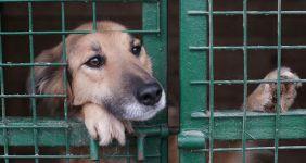 Pet- Adoption 4