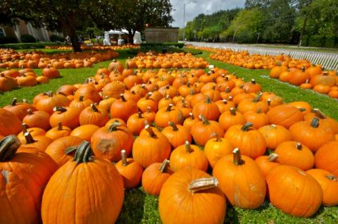 autumn-pumpkins-disply-via-begin-with-yes-fb-uncredited