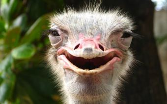 Ostrich- Happy, via Google uncredited 1