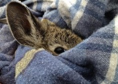 Bunnies in a Blanket via Rabbits.life