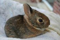 Bunnies in a Blanket via Google uncredited