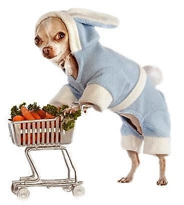 Chihuahua Shopping with Cart, via Pinterest uncredited