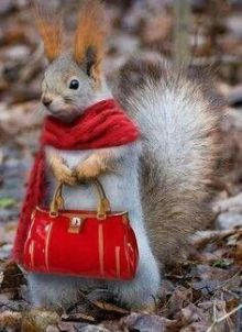 Mother Squirrel Shopping, via Google uncredited