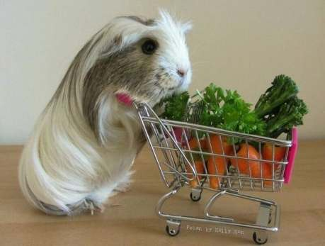 Shopping with a Cart, Pinterest uncredited