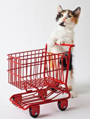 Cat with Food Cart, via ABC News, Go.com