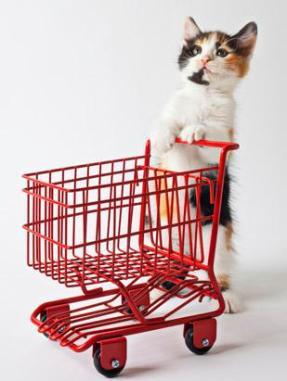 Cat with Food Cart, via ABC News, Go.com