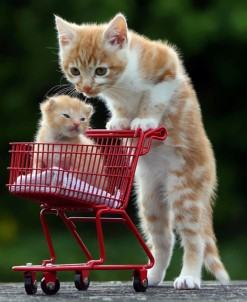 Mother Cat with Kitten in Cart, via earthporm.com