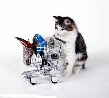 Cat with Shopping Cart, via NOLA.com