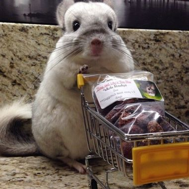 Chinchilla with Shopping Cart, via Pinterest uncredited