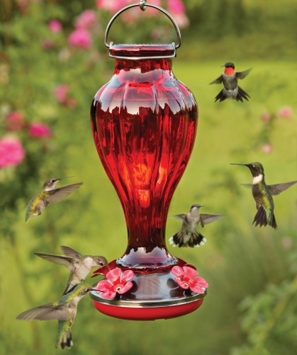 Red Glass Bottle Hummingbird Feeder - via Duncraft.com