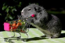 Guinea Pig with Grocery Cart via ABC News- Go.com