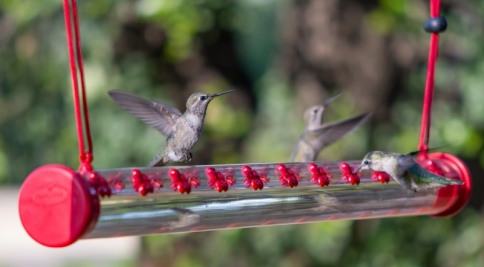 Horizontal Hummingbird Feeder via Perky Pets