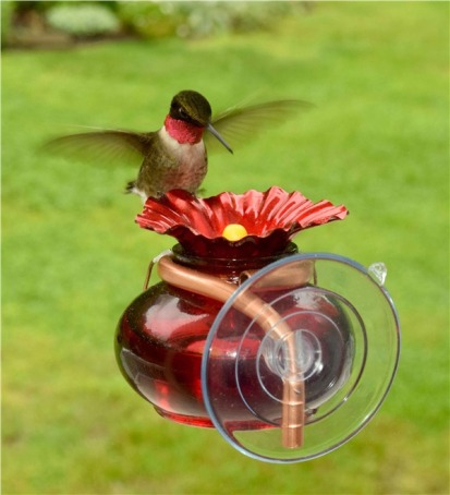 Hummingbird Feeder, Window Suction Mount via Plow and Hearth