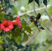 Native Plant via Mother Nature Network, by Charles Brutlag, Shutterstock