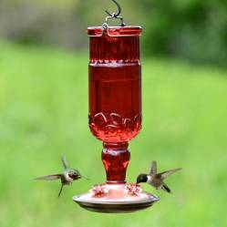 Red Glass Antique Style Bottle Hummingbird Feeder via Perky Pet
