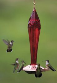 Ruby-red Glass Hummingbird Feeder by Duncraft