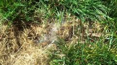 Rabbit Nest in Yard 3 via Google Uncredited